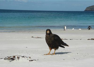FalklandCG201001