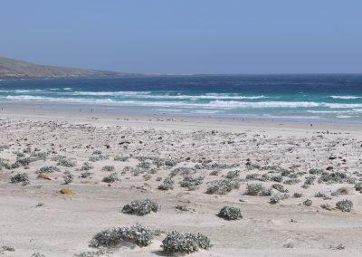 FalklandCG201003