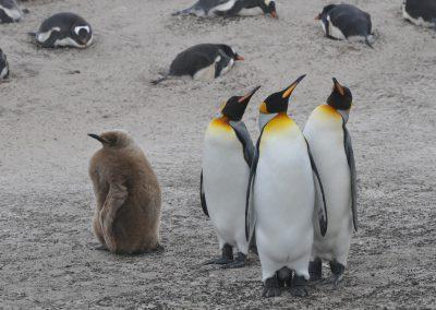 FalklandCG201007