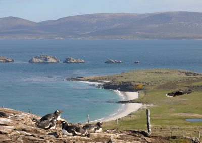 FalklandCG201008