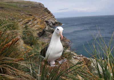 FalklandCG201009