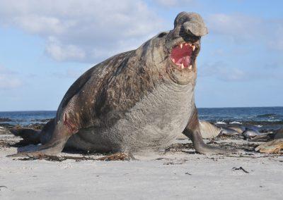 FalklandCG201012